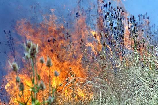 """""""Los incendios ocurren por negligencia o intencionalidad"""""""