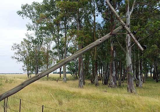 La tormenta del sábado produjo importantes daños en Espigas
