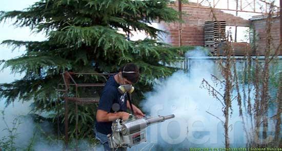 Detectaron nuevas larvas del mosquito transmisor del dengue