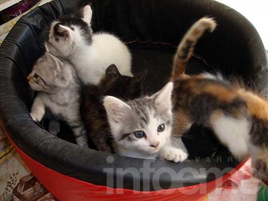 Perros buscados y gatitos para regalar