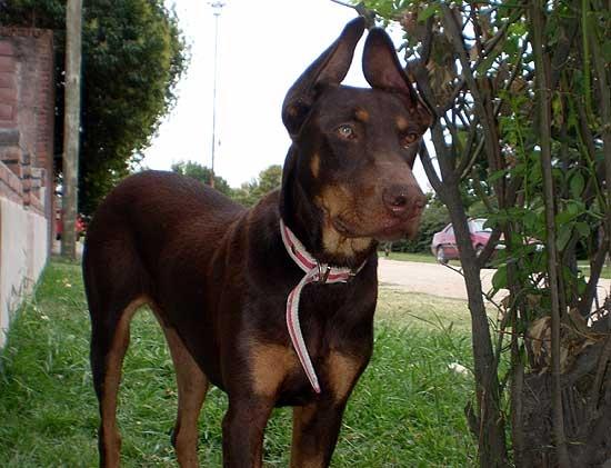 Perros hallados y extraviados