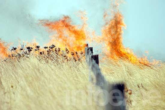 Incendio deja cerca de mil hectáreas quemadas en Crotto