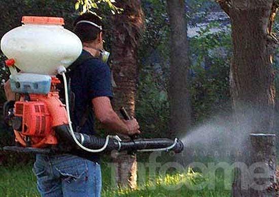 No se han detectado larvas del mosquito transmisor del dengue
