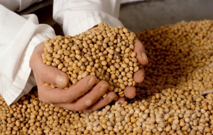 El Gobierno espera  para que los sojeros liquiden más dólares