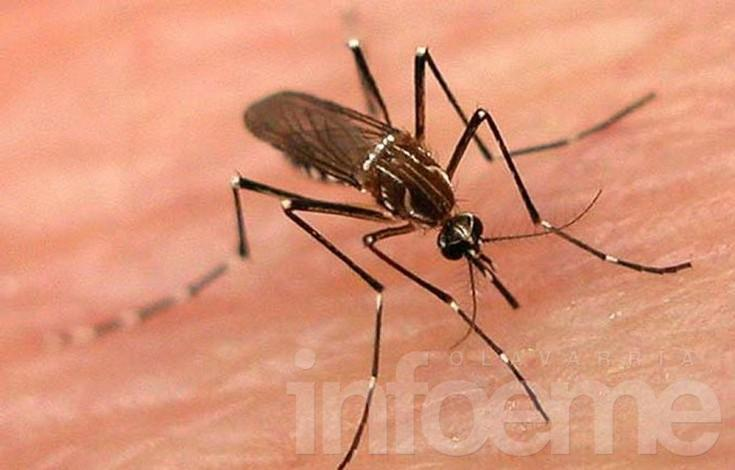 """El Gobierno confirmó que el dengue """"pasó de ser un brote para convertirse en epidemia"""""""