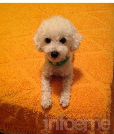 Rocco se perdió y está en tratamiento