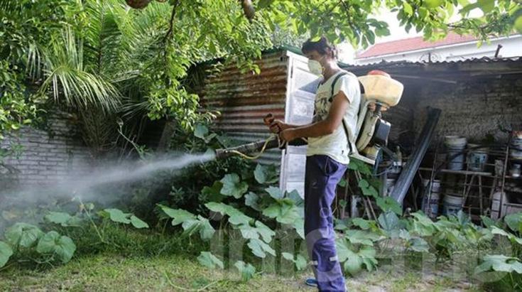 Dengue: confirman la presencia de larvas en barrio Luján