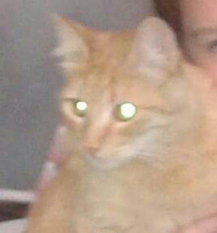 Una familia busca a Camila, su gatita