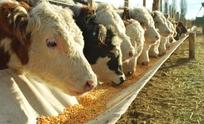 Reglamentan ley que regula a los feedlots en la Provincia