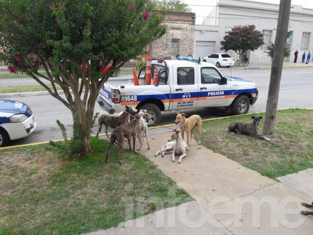Atrapan a cuatro jóvenes cazando con perros galgos