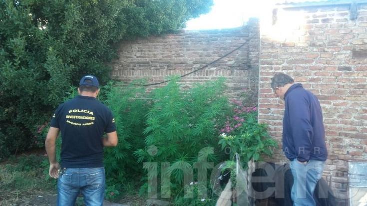 Lo detuvieron por un robo, le allanaron la casa y encontraron plantas de marihuana