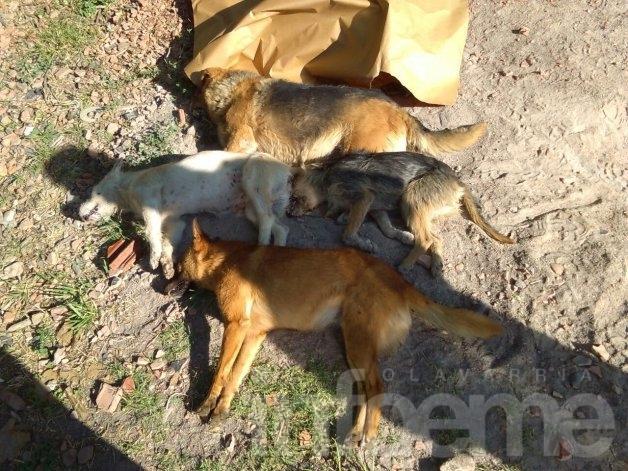 Indignación por envenenamiento de perros en el PIO