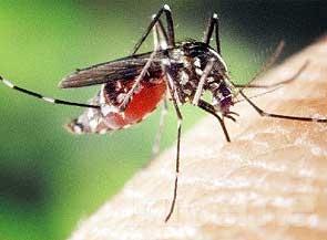 Aconsejan intensificar medidas contra el dengue