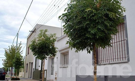 """Piden informes por la """"no entrega"""" de árboles del plan municipal"""