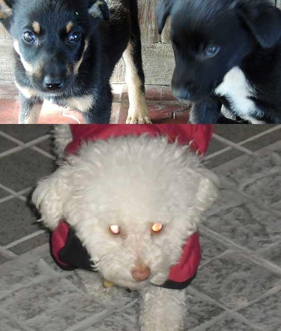 Dan en adopción responsable tres cachorros