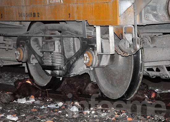 Un tren de carga arrolló a un caballo