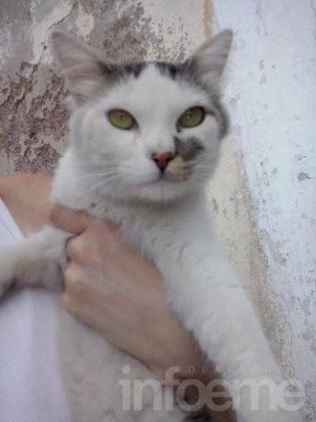 Se da en adopción un pequeño gato