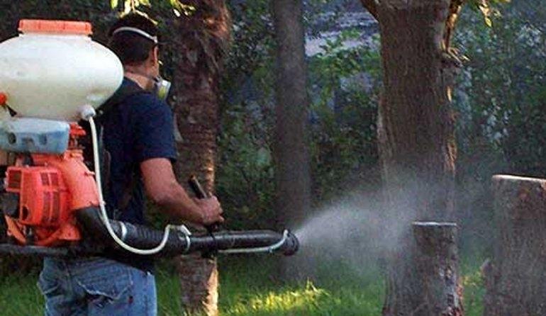 Vuelven a encontrar larvas del mosquito transmisor del dengue