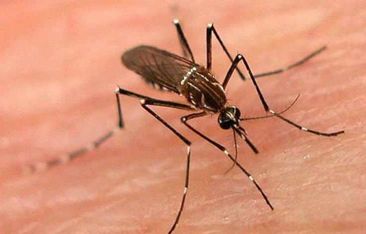 """""""La situación de alerta frente al dengue persistirá hasta mayo"""""""