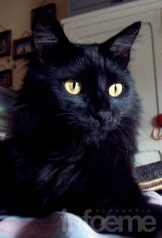 Se perdió una gata negra en el centro