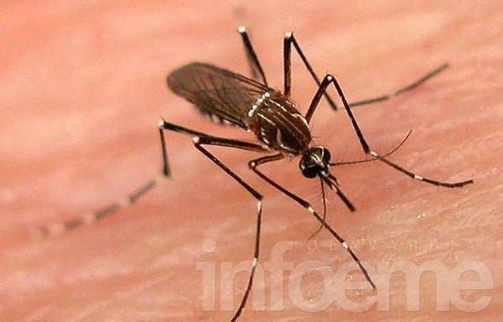 Confirman tres nuevos casos de sospecha de dengue: suman seis en total