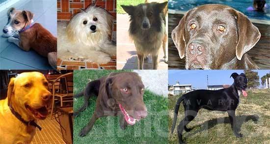 Perros perdidos, encontrados y gatos en adopción