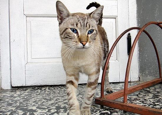 Mascotas perdidas, halladas y en adopción