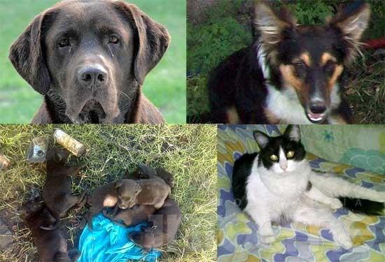 Perros en adopción y gato perdido
