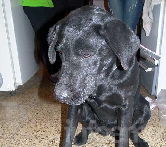 Perros encontrados, perdidos y en adopción