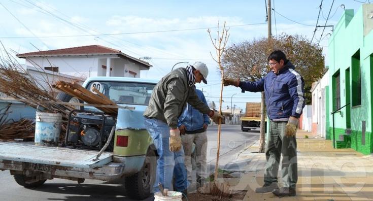 Arbolado urbano: 250 vecinos se anotaron en una semana