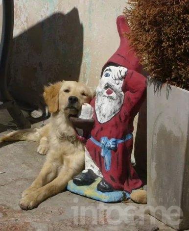 Se buscan dos perras