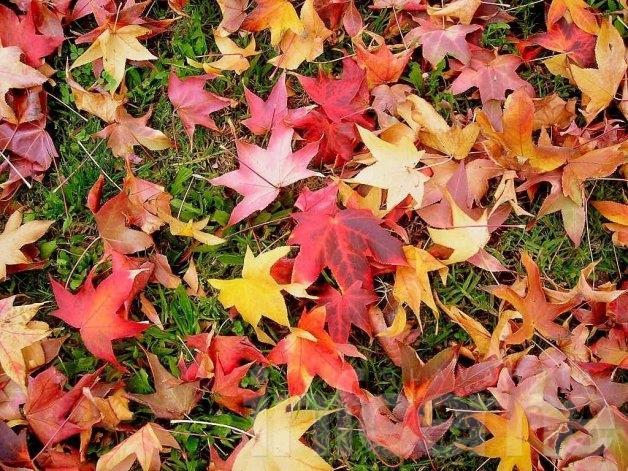 Descienden las temperaturas y se adelanta el otoño