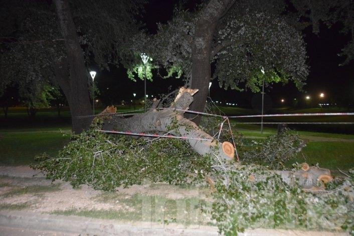 Sólo un susto: una parte de un viejo árbol cayó en el Parque Cerrito