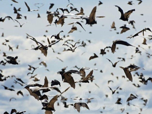 """¿Son los murciélagos la """"solución"""" para combatir el dengue?"""