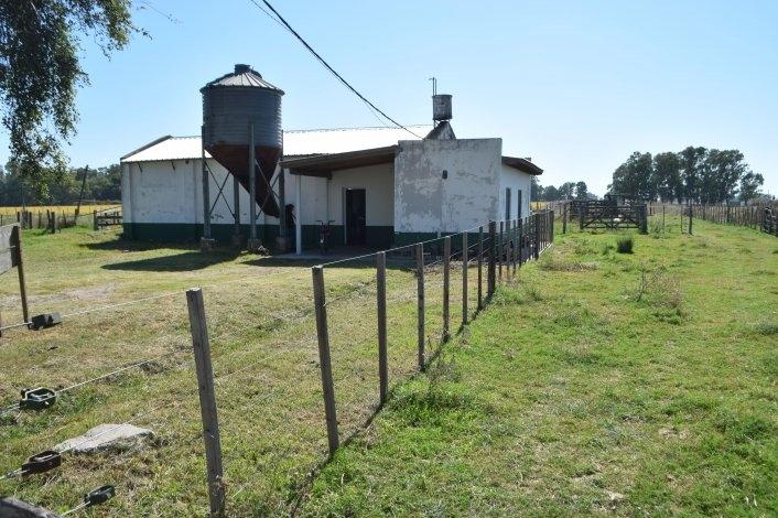 Abigeato: carnearon un ternero en la escuela Agropecuaria