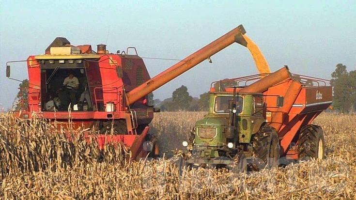 Acaso hoy, ¿el maíz es más rentable que la soja?
