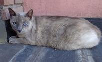 Buscan a los dueños de una gata perdida
