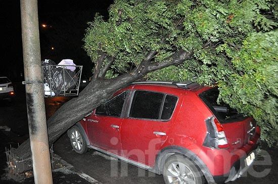 Un árbol cayó sobre automóvil estacionado en pleno centro