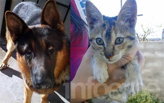 Encuentran perro y regalan gata