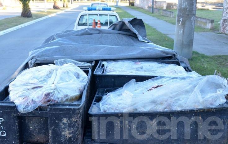 Se decomisaron 800 kilos de pejerrey  en vehículo que provenía de pesca furtiva