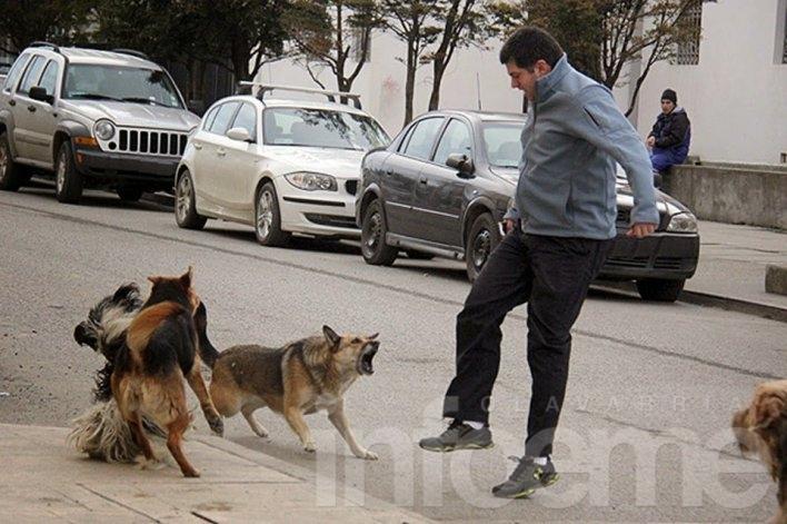 Multas para dueños de perros que mordieron a transeúntes