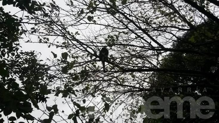 """Especialistas de """"La Máxima"""" rescataron un mono suelto encontrado en Azul"""