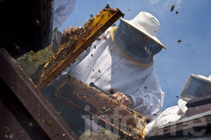 Trámites apícolas en la Oficina de la Dirección Agropecuaria