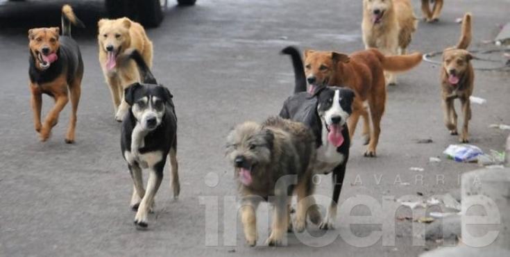 12 vecinos infraccionados por no respetar la tenencia responsable de mascotas
