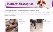 "Municipio habilitó el micrositio ""Mascotas de Olavarría"""
