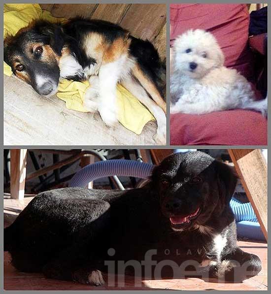 Cachorro perdido y perritas en adopción