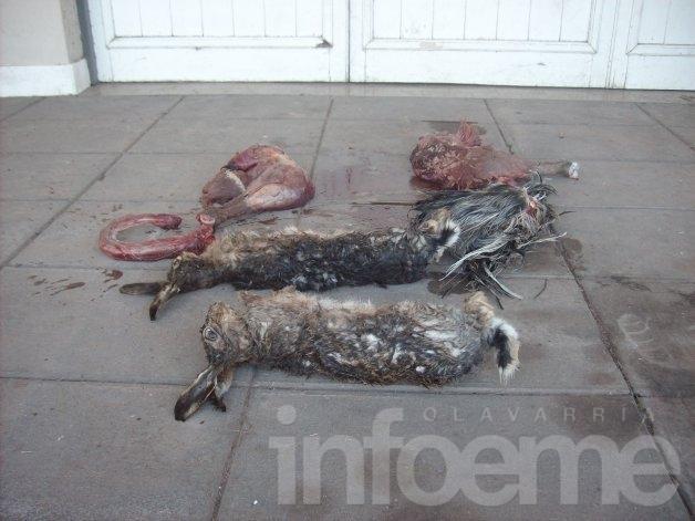 Atrapan a cazadores furtivos en campo de Pourtalé