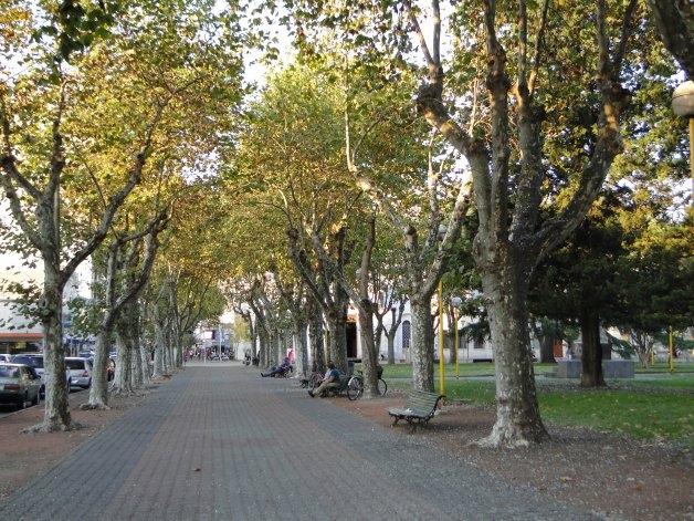 Podar es antinatural: consejos y tips para cuidar los árboles