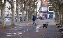 Podarán árboles de la plaza para combatir los tordos
