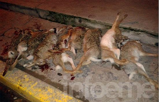 Los atrapan cuando practicaban caza furtiva de liebres